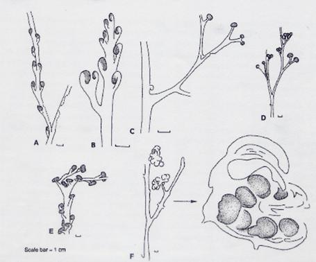 简单室内植物手绘图
